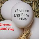 Today Egg Rate in Chennai – July 31, 2021