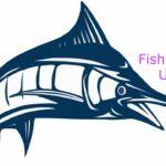Fish Price in Udupi Today