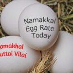 Namakkal Egg Price Today – July 31, 2021
