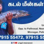 Today Fish Rate in Pollachi