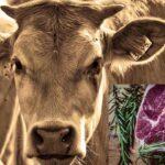 Beef Price In Kerala